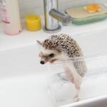 入浴時は安定したかわいさ