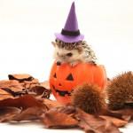 Happy ★ Halloween