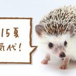 ハリネズミ 電気代(冷房費)検証 2015