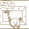 ハリネズミの慣らし方4